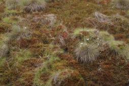 Aus ehemaligen Torfabbauflächen werden naturnahe wachsende Moore.